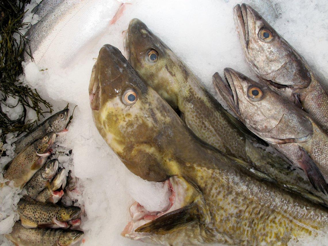 Fiskeriene sentraliseres
