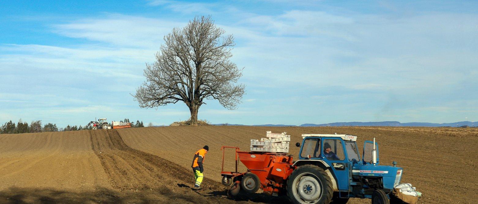 2020 - Bønder som setter poteter, våronn i Frogn, Akershus