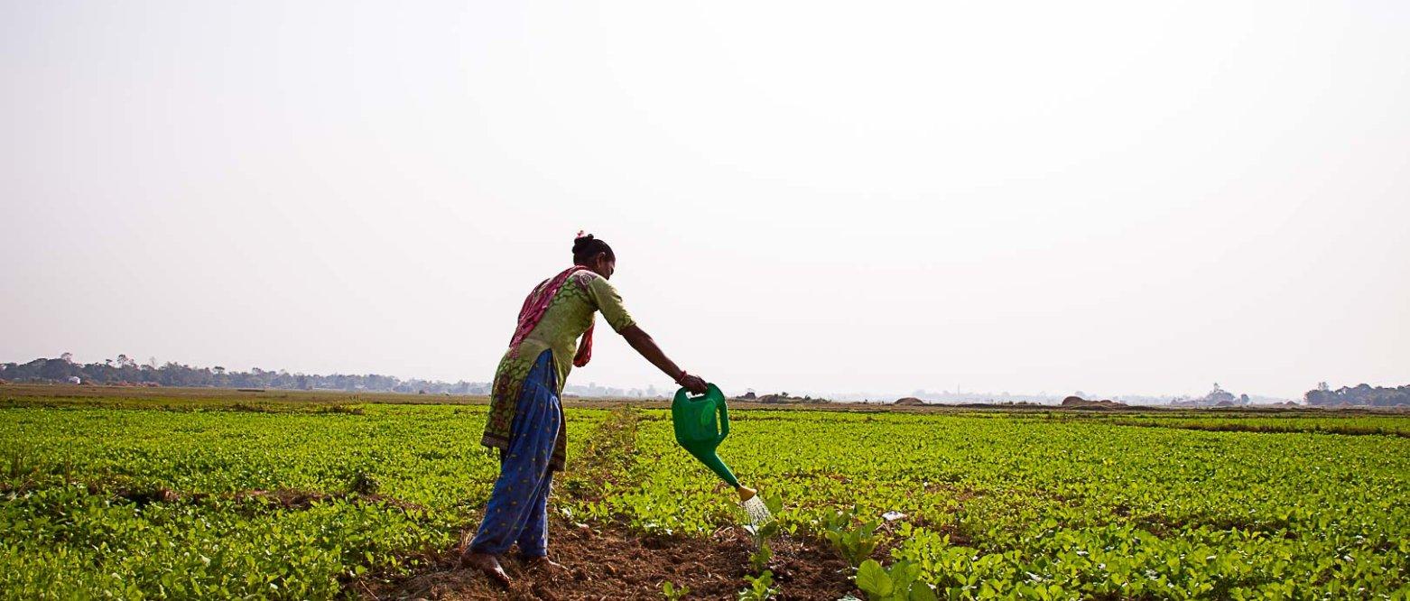 Mat, miljø og demokrati i Nepal