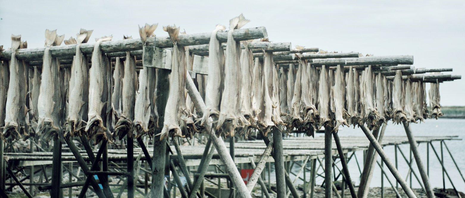 Fiskeriministeren må stanse det kystnære fisket etter raudåte