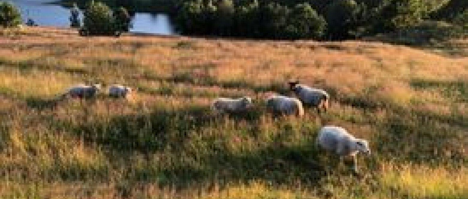Jordvern og landbrukspolitikk på en øy i Farris